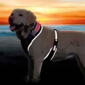"""Шлея для собак """"Safer Life Flash"""" светоотражающая черная Trixie"""