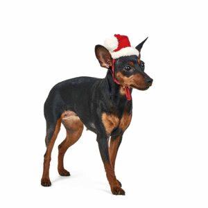 Колпак новогодний для собак Pet Fashion M, S, XS